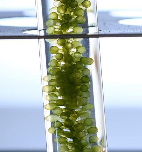 IFPEN accompagne FunCell dans le développement d'additifs biosourcés pour l'industrie papetière