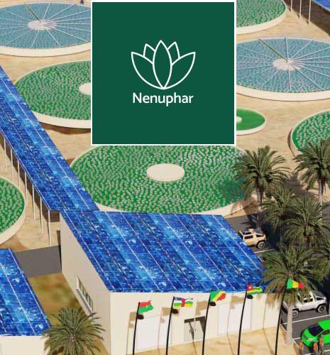 Culture des micro-algues : IFPEN partenaire de la start-up Nenuphar