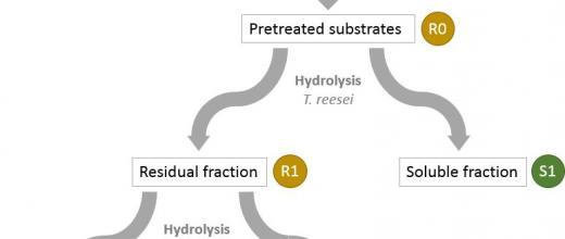 Le projet F'Unlock pour déverrouiller l'hydrolyse de la biomasse végétale à l'aide d'enzymes