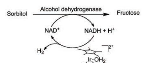 La catalyse hybride peut s'alimenter en biosourcé