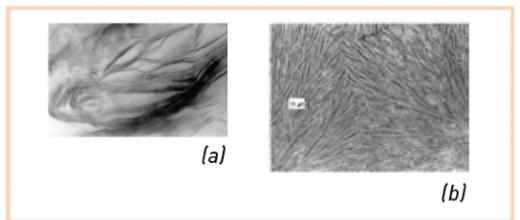 Les polymères semi-cristallins : des argiles qui s'ignorent ?